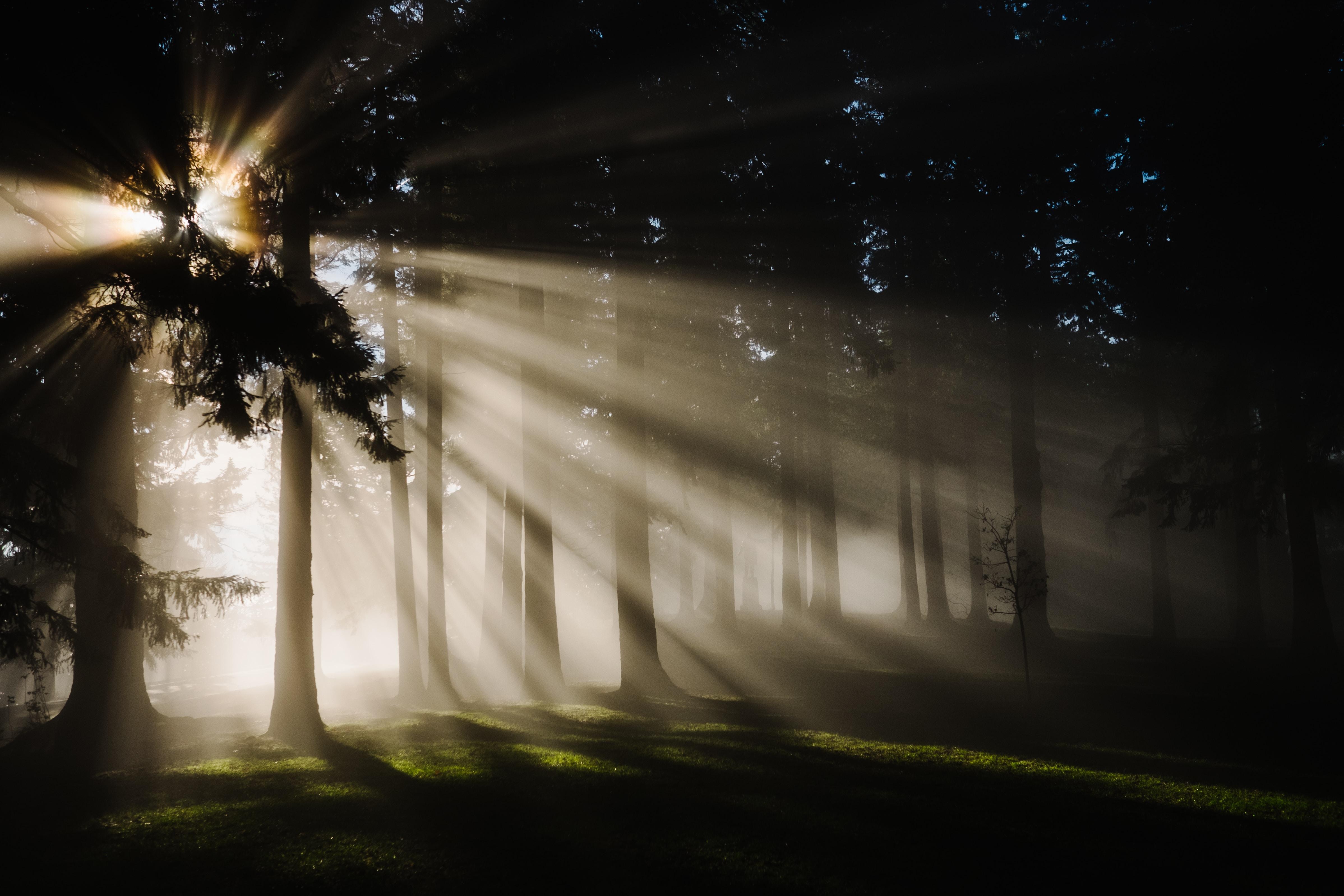 website sunlight through trees