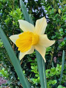 look to the lilies photo of yellow flower
